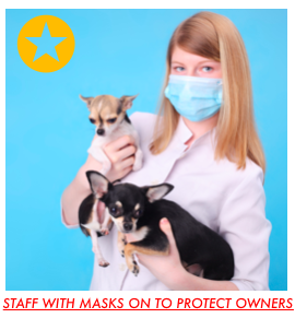 Staff with mask on to protect owners