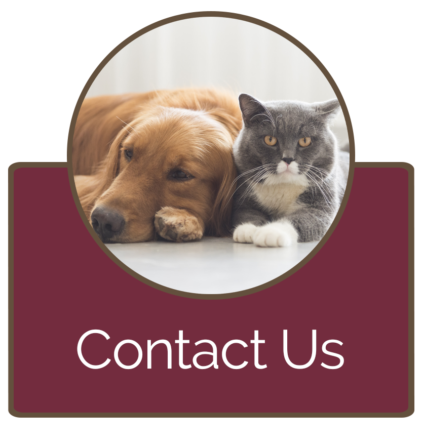 Contact Brooklyn Veterinary Hospital